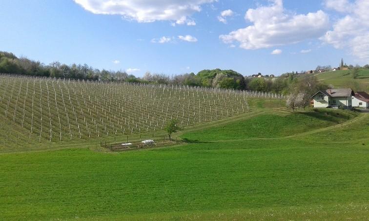 Vinogradništvo Vrbnjak